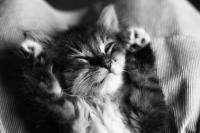 kitten_sleep_by_jaymilina