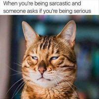 fb05da42f22694c36e8b59371dafba22--capricorn-female-being-sarcastic