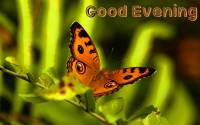 Good-Evening-Butterfly