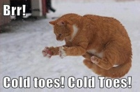 cold-toes-cat