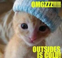 kitty cold