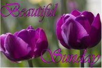 177073-Beautiful-Sunday
