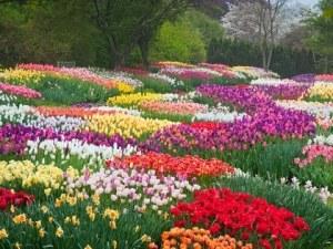 spring_flowers_2015_longwood_cr_LongwoodGardensLAlbee
