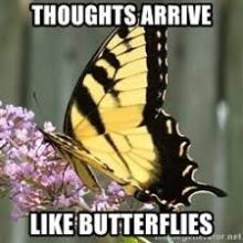 Thoughts arrive like butterflies