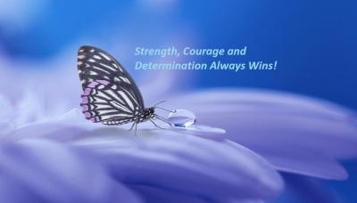 butterfly-3054736_960_720