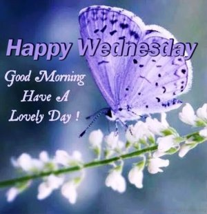 Happy-wednesday-good-Morning-have-a-lovely-day
