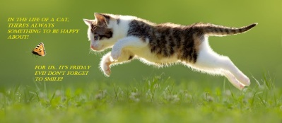 Friday Eve cat