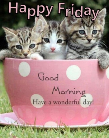 241852-happy-friday-good-morning-quote-with-cats.jpg