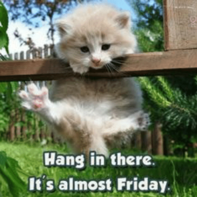hang-in-there-it-s-almost-friday-hang-in-there-45702078.png