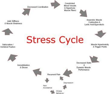 stress cycle