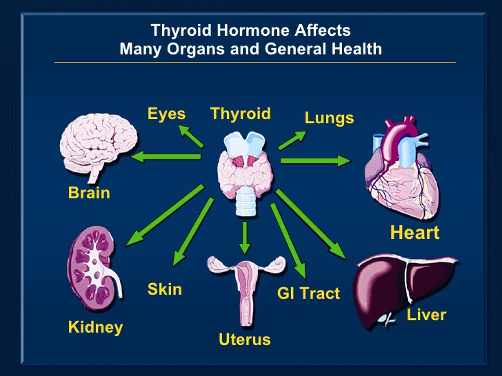 thyroid affects
