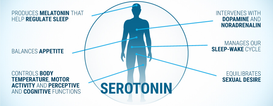 what-does-serotonin-do