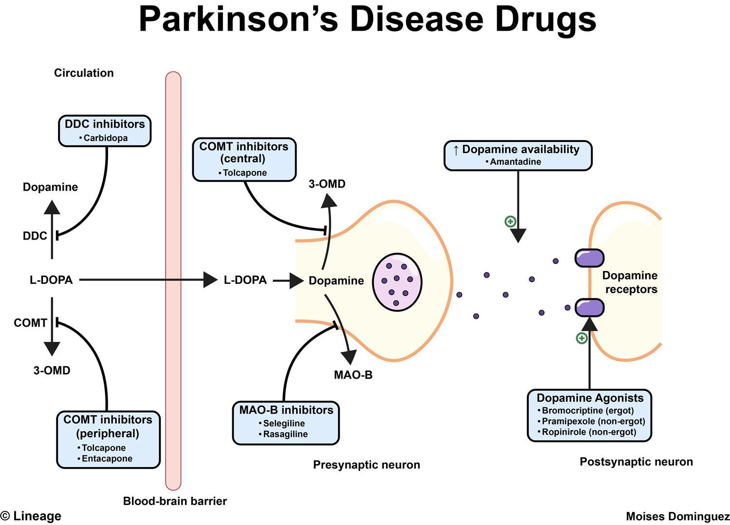 parkinson disease drugs - moises dominguez - updated