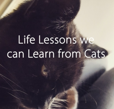 life-lessons-we-can-learn-from-cats-the-last-krystallos