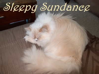 Sleepy Sundance